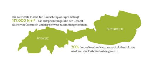 Infografik zum Naturkautschuk